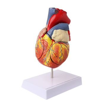 Disassembled Anatomical Human Heart Model Anatomy Medical Viscera Organs Medical Teaching Resource Tool 1 1 pvc high quality cardiac anatomy model medical teaching tool art tool instructional tool clinic figurines
