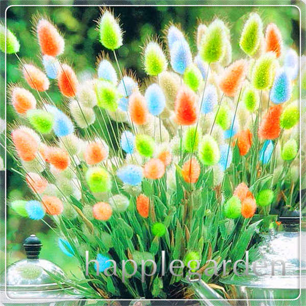 ประดับหญ้า Bonsai 100 Pcs กระต่ายกระต่ายหางหญ้าพืช Bonsai น่ารักประดับสนามหญ้าหญ้า DIY Home Garden Plant