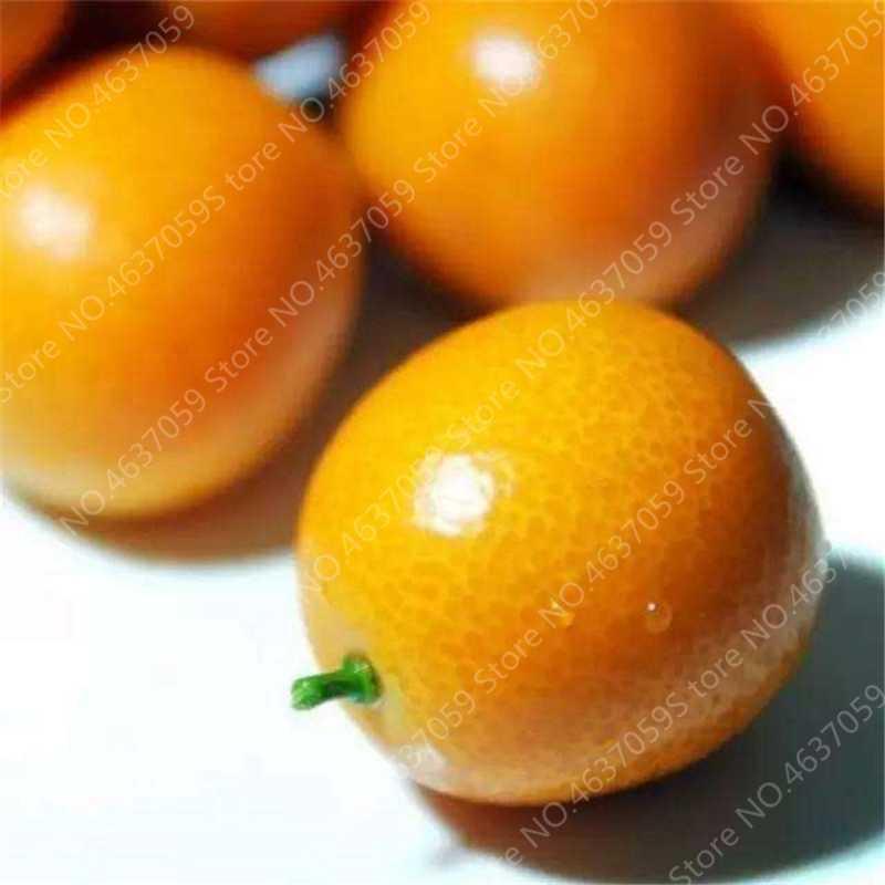 โปรโมชั่น! 50 Pcs ระเบียง Patio ต้นไม้ผลไม้ Kumquat Bonsai Garden ORANGE Flores Tangerine Dwarf Citrus Juicy ORANGE Frui