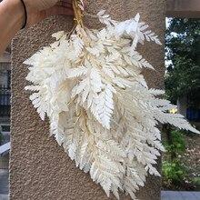 10 pces/18-25cm natureza fresco preservado arachniodes folha, casamento diy casa caixa de presente decoração, eternell flor planta