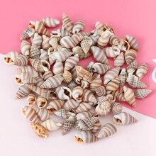 Wall-Decoration Seashells Conch Aquarium Landscape Mix-Style Natural Mini DIY 1-3cm 1-Box