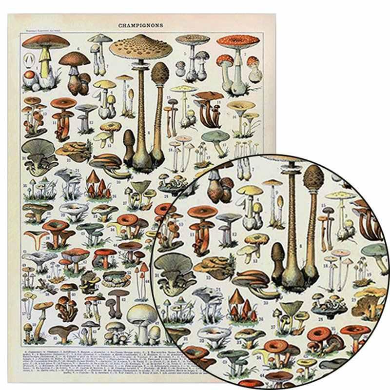 בציר אדולף Millot אנציקלופדיה כרזות פרפר פטריות פרחי עשבי תיבול חרקים קלאסי בד ציורי קיר מדבקות
