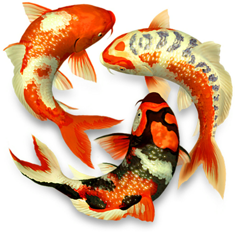 Koi peces grandes Completo Taladro coulorful Hágalo usted mismo 5D Diamante 80*30cm fotos de pintura