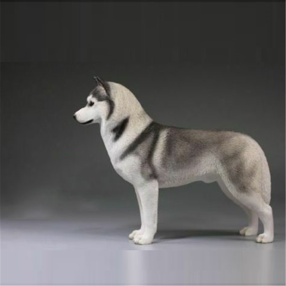 Mr. Z 002 1/6 échelle sibérien Husky chien Animal modèle Statue Simulation Animal sauvage enfant jouets F 12 ''Action figurine Collection