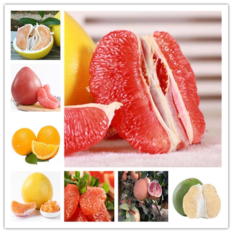 10 Pcs Of Bag Hardy Mini Pummello Pomelo Tree Dwarf Kao Pan Grapefruit! Rare Bonsai Fruit Plant For Home Garden Free Shipping
