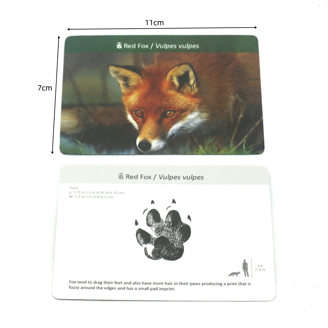 Montessori Material Animals  Footprints Flash Cards Montessori English Learn Card Early Educational Toy Memory Game for Children 5