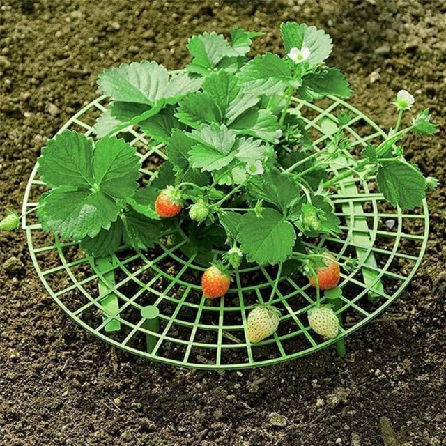 Supports plastique pour plantes à fraises | 5/10 pièces, Supports pour la culture de fraises jours de pluie, garder fraises baies, propre, fournitures de jardin Anti-corrosion