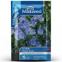 American Heirloom MARSEED Echium Vulgare Flower  Seedsplants Seedling Garden Outdoor