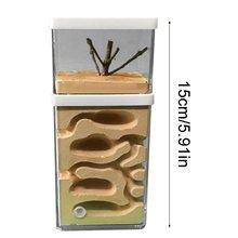 Наблюдения насекомых муравей холм цеха гипса гнездо коробка