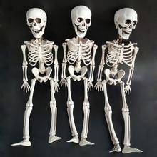 цены на Halloween Prop Human Skeleton Full Size Skull Hand Life Body Anatomy Model Decor 3 Pcs Halloween Decoration 40cm в интернет-магазинах