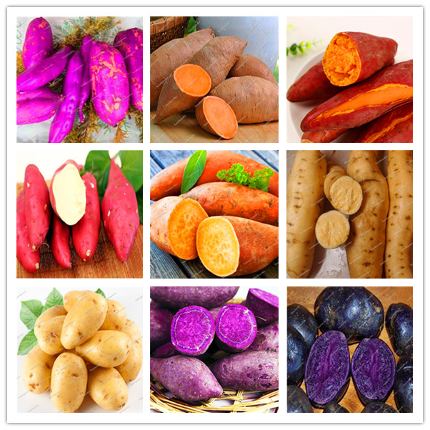100 pcs/bag sweet potato flores Vegetables plantas fresh food Fruit And Vegetable Garden Supplies bonsai plant for home garden