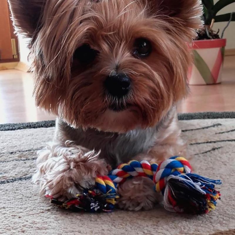 Собачья игрушка для домашних животных прочный двойной узел из хлопчатобумажной веревки плетеная Кость Форма Щенок Жевательная молярная игрушка чистящие принадлежности для зубов (случайный цвет)-4