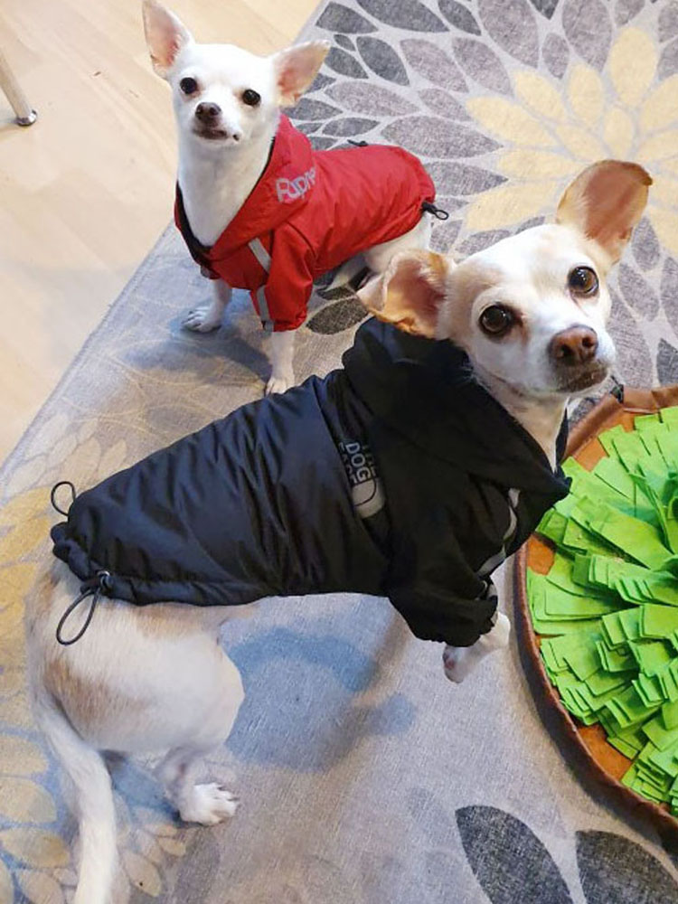 Clothing Puppy-Coat Pet-Apparel Dogs Reflective Dogface Small Winter Warmjacket for Medium
