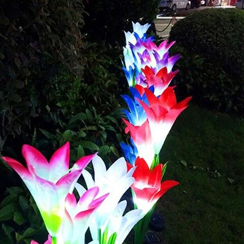 4 cabeca flor de lirio luz solar