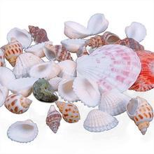 Фото - 100g/bag Mixed Sea Beach Shells Crafts Seashells Aquarium Decor Photo Props декор legend seashells 20 45 336763 73 44