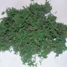 Mousse naturelle séchée en résine époxy, 15 g/lot, pour décoration de maison, vraies plantes, photographie, accessoires artisanaux pour bougies, fête de jardin