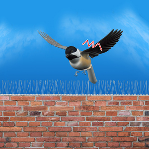 Image 4 - 0.5M/1M/2M/3M/5MสแตนเลสสตีลPigeon Swallow Sparrow Bird spikes Defender Anti Birdหายไปยืดหยุ่นฐานพลาสติกแถบ