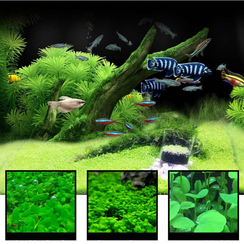 7 Styles Aquarium Plants Aquatic Water Grass 20g Seeds Cow-hair LOVE Lucky Seeds Fish Tank Plants Decoration Landscape Ornament