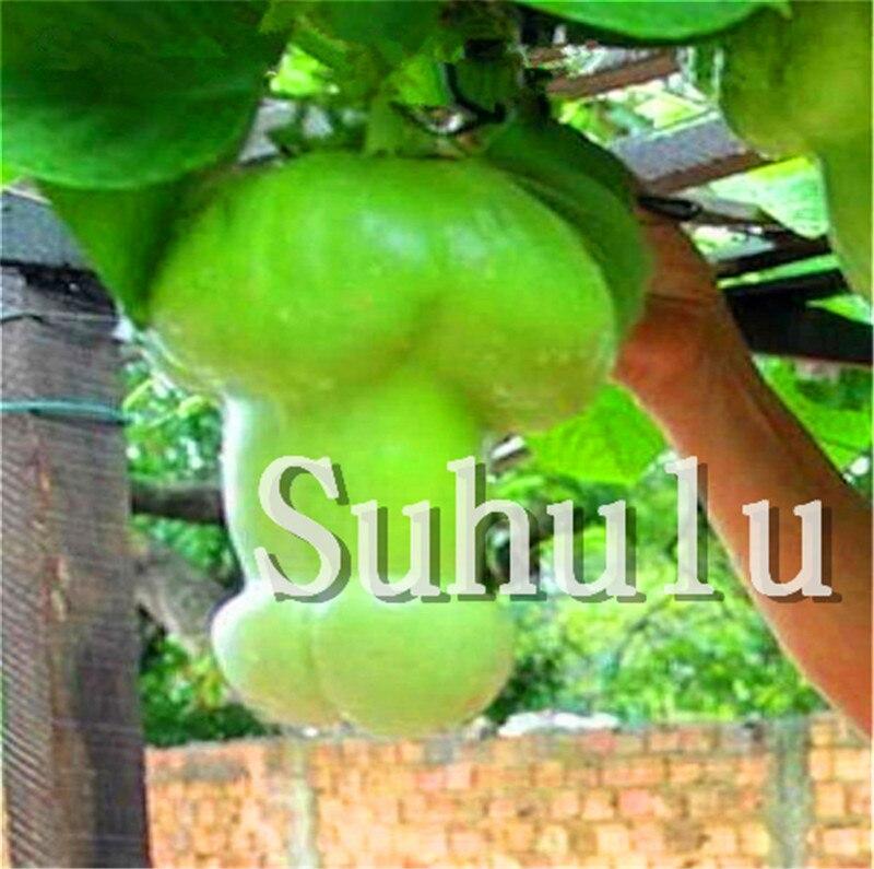 Magic Pumpkin Bonsai 30 Pcs Chinese Rare Big Penis Melon Plants Vegetables Planting For Home & Garden Non-GMO Plant Pot