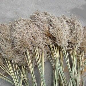 Image 3 - Tüy 30 40cm düğün pampas çim buket noel dekorasyon çiçek demet pampas çim doğal kurutulmuş reed bitkiler