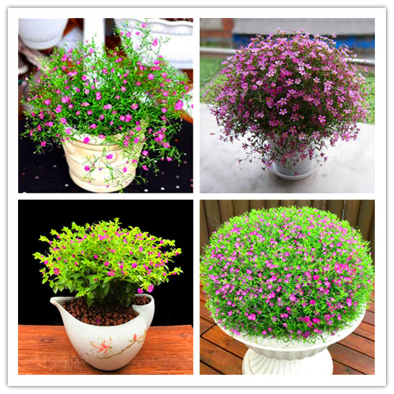 100 Flores/bag Big Promotion! Gypsophila Paniculata Bonsai, Beautiful Flower Plants,ornamental Flowers For Home And Garden
