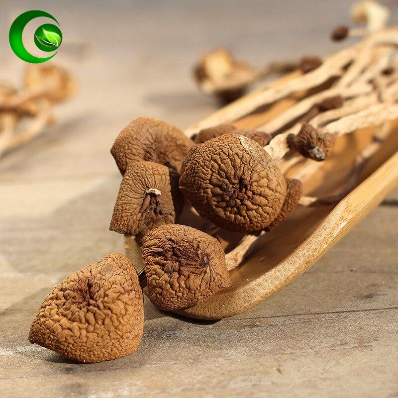Agrotybe aegerita chaxingu brilhante ganoderma yanagimatsutake castanha cogumelo cha shu gu