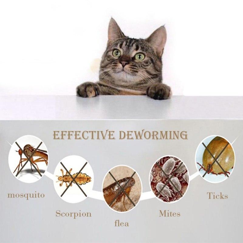 insectos parasitos de los gatos