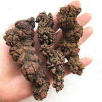 1pc Natural Dinosaur Dejecta Fossil Rough Feces Fossil Specimen Natural Crystal Minerals 30-100 grams