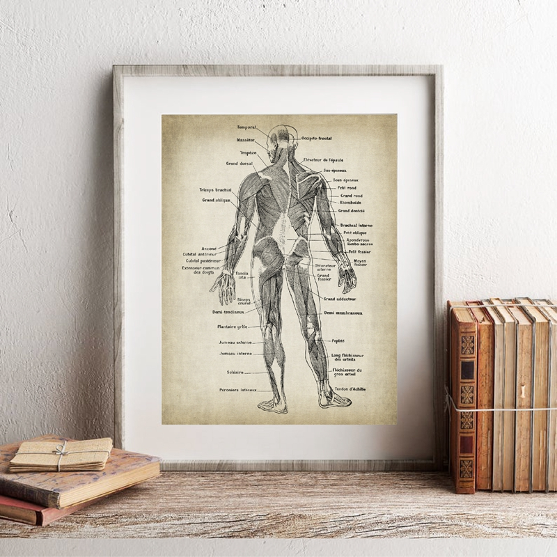 Anatomical Drawing Art Illustration Prints