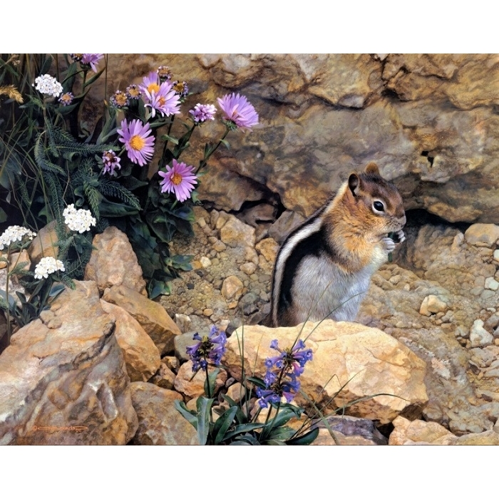 Painting By Numbers Chipmunk, 40x50 Cm