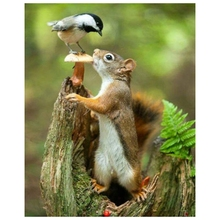 Full Round Drill 5D DIY Diamond Painting Squirrel Bird Embroidery Cross Stitch 5D Home Decor Gift dispaint full square round drill 5d diy diamond painting teacup bird scenery 3d embroidery cross stitch 5d home decor a18408