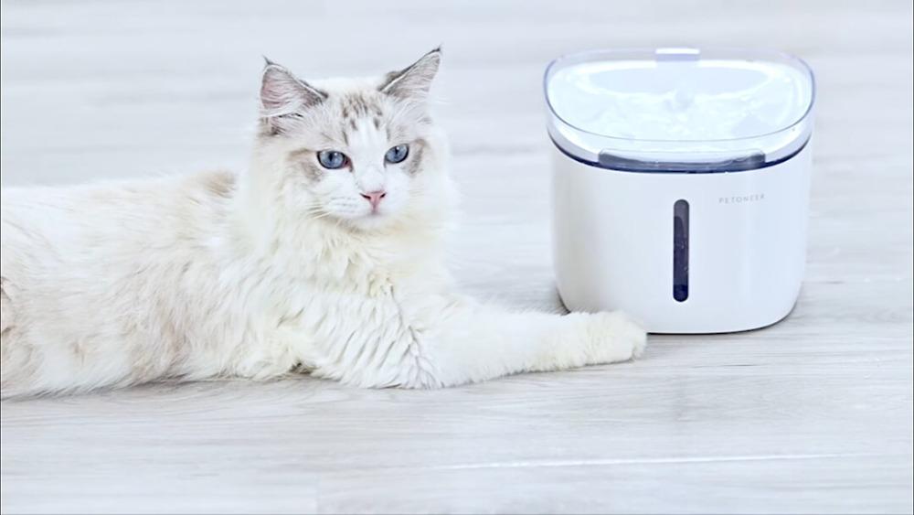 Fuente gato Xiaomi