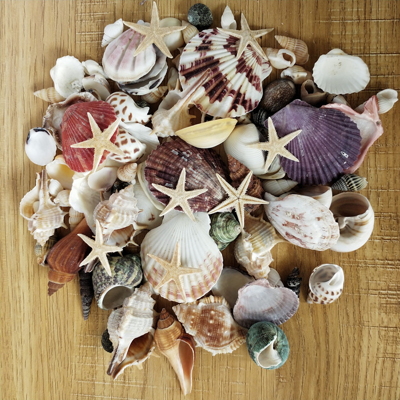 100PCS Mixed Ocean Sea shells Wedding Decor Beach Theme Party, Seashells Home Decorations, Fish Tank, sea star 6