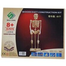 Детская Сборная модель скелета, 3D деревянная головоломка, набор для строительства, детские 3D деревянные развивающие игрушки