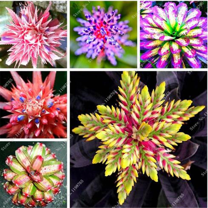 150Pcs Bromeliad Bonsai Vegetable And Fruit Garden Succulent Plants Mini Cactus Pots Cheap Rainbow Children Bonsai Flower Planta