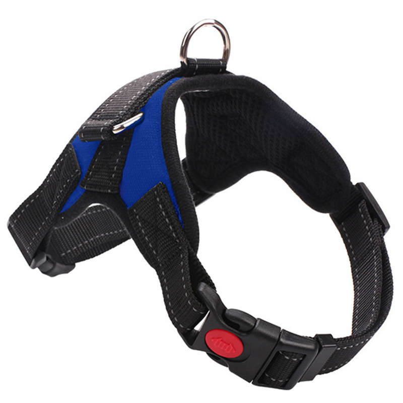 blue Harnesses