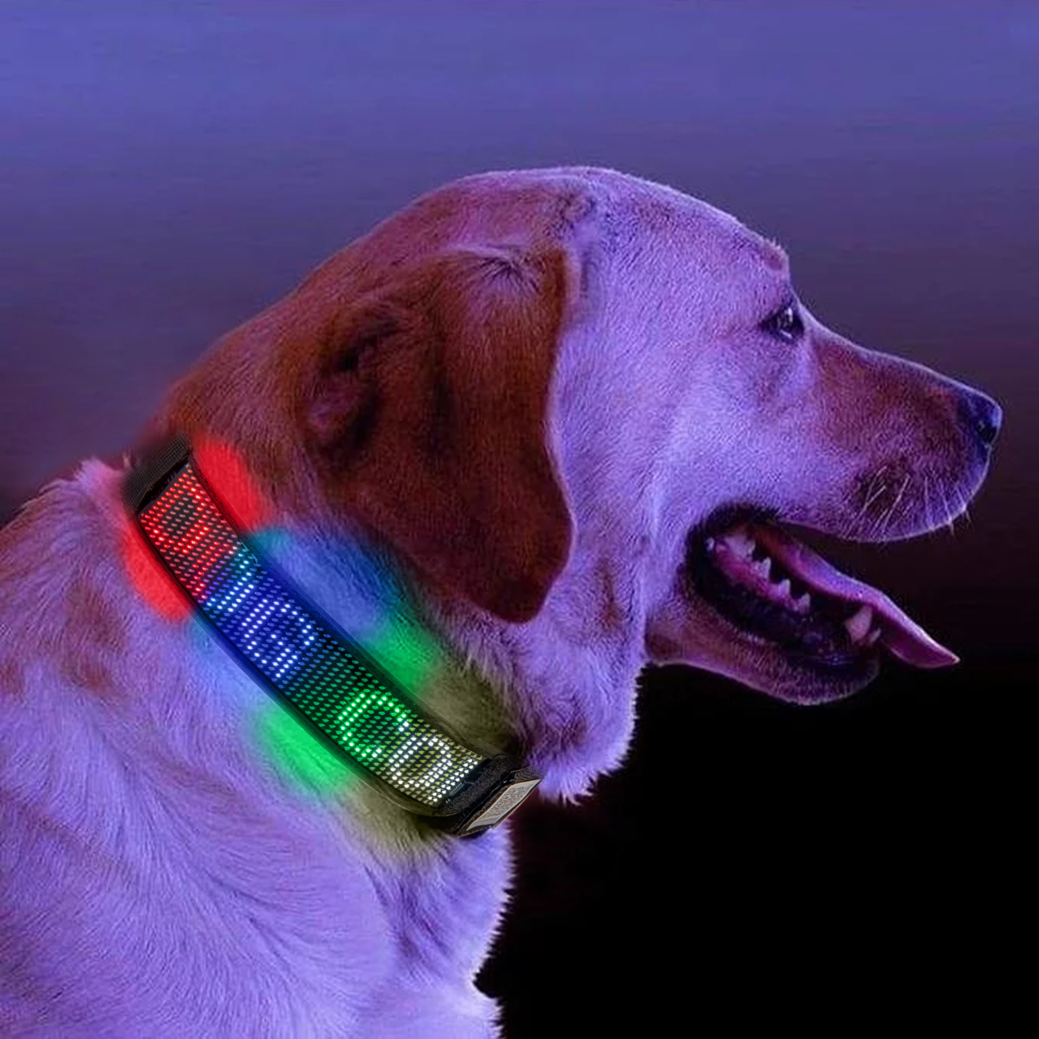 Night Safety Led Glow Collar Bluetooth Programmable Scrolling Message Display Rechargeable Flashing Led Dog Tag Sign