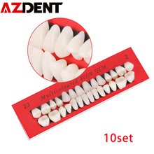 10 set Dental Teeth Model Adult Permanent Dentist tooth Anatomical Anatomy Model Full Month Dental Communication Tooth Models