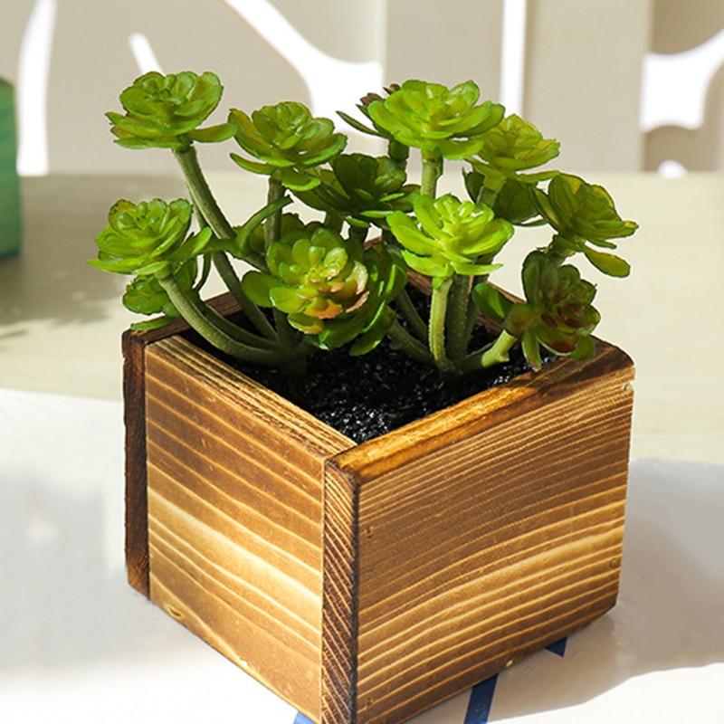 Mix Cactus Seeds Rare Succulents Plant Home Garden Decoration Bonsai Hot