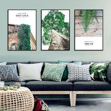 Зеленые растения фотографии скандинавские плакаты криперы большие