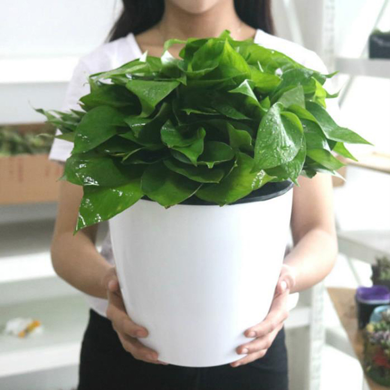 Water Culture Wall Hanging Basin Basket Plant Storage Holder PP Flower Pots Flowerpot Automatic Water Absorption Lazy Flower Pot