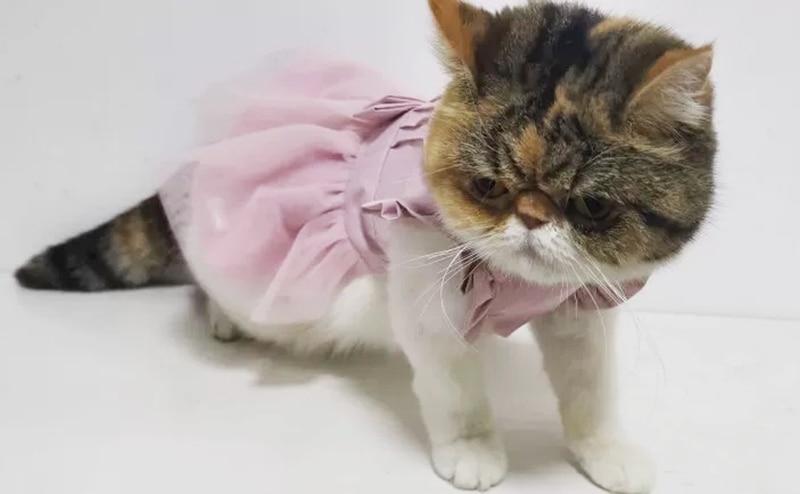 dog cat dress