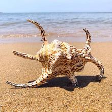 Home-Decorations Snails-Shell Conch K Aquarium Sea Natural Large Big Floor