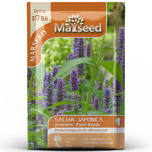 American Heirloom MARSEED Salvia Japonica Flower  Seedsplants Seedling Garden Outdoor