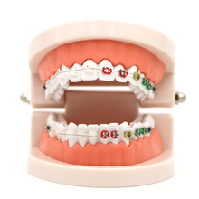 1pc Dental Orthodontic Treatment Model With Ortho Metal Ceramic Bracket Arch Wire Buccal Tube Ligature Ties Dental Tools