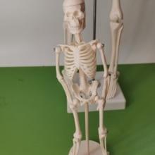 18 см гибкий медицинский человек анатомический скелет модель человека анатомическая boneco игрушка в медицинских науках