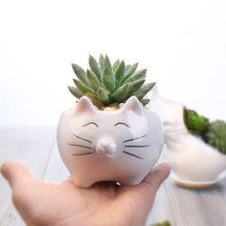 Cute kitten cat biała ceramiczna doniczka na kwiaty pulpit kieszonkowy doniczka europejska sukulenta doniczka Bonsai darmowa wysyłka w Doniczki i skrzynki do kwiatów od Dom i ogród na
