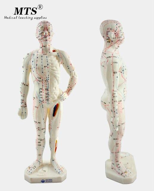 26 ซม.ทางการแพทย์จีนแพทยศาสตร์Meridiansการฝังเข็มMoxibustionรุ่นการฝังเข็มจุดMannequinฝังเข็มชุด