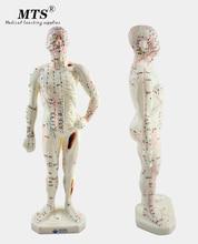 26 سنتيمتر الطبية الطب الصيني خطوط الطول الوخز بالإبر الكى نموذج الوخز بالإبر نقطة عارضة أزياء الوخز بالإبر نموذج