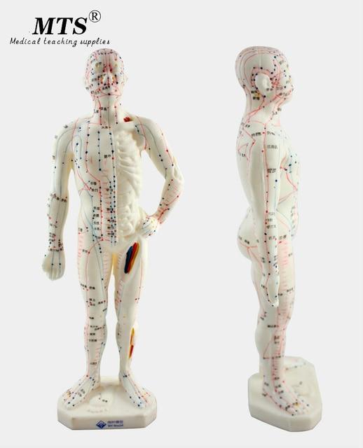 26 センチメートル医療中国医学経絡鍼灸モデル経穴マネキン鍼モデル